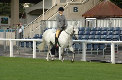 RDS Dublin Horse Show 2009, Class 24: Riding Horses. Kilbride Billy Jo owned by Mrs Philippa Mansergh-Wallace.